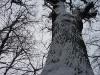 Schnee am Baum