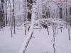 Verschneiter Baumstamm