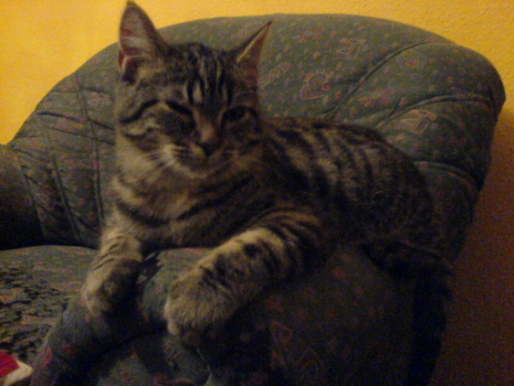 Privat: Die Katze