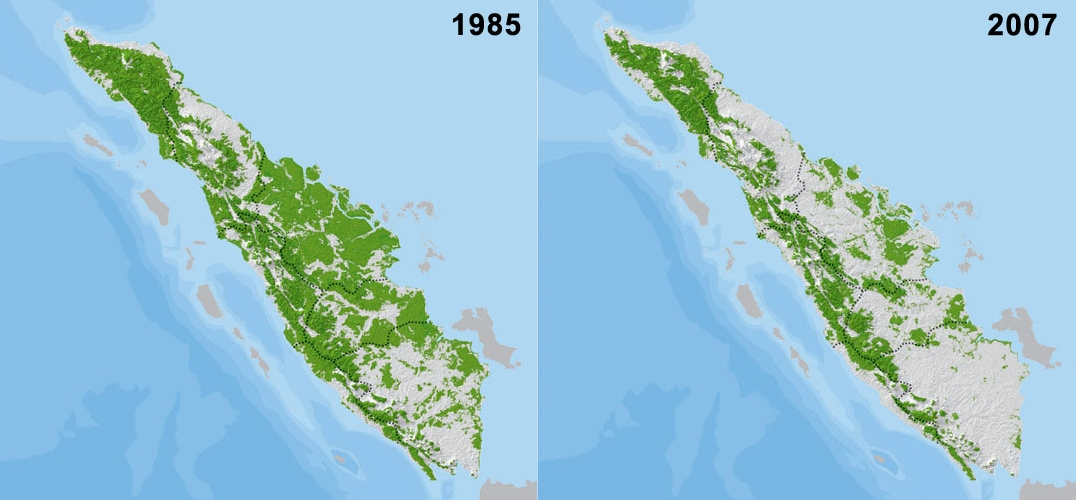 Waldverlust in Indonesien kartographisch visualisiert