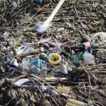 Midway – Plastikmüll und Albatrosse (Doku-Trailer)