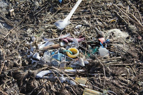 Albatross Überreste und Plastikmüll
