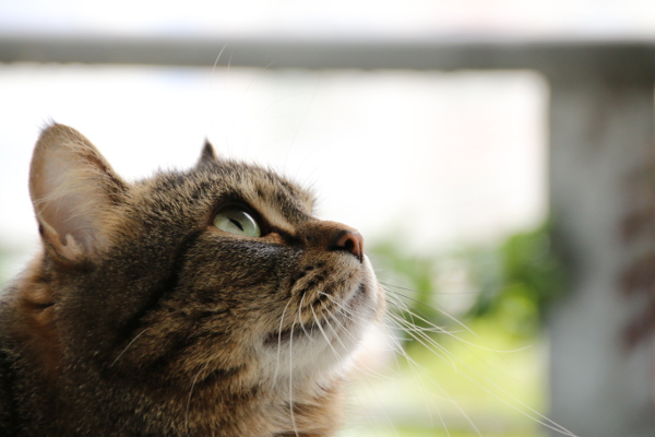 Katze hat die Schwalben im Blick